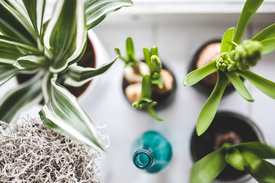House Plants tips to look after them in Winter