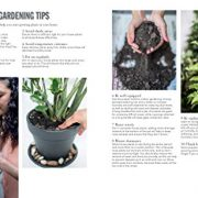 House-Plants-How-to-look-after-your-indoor-plants-with-helpful-advice-step-by-step-projects-and-inventive-planting-ideas-0-6
