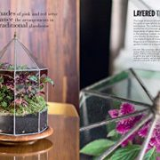 House-Plants-How-to-look-after-your-indoor-plants-with-helpful-advice-step-by-step-projects-and-inventive-planting-ideas-0-7