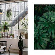 House-of-Plants-Living-with-Succulents-Air-Plants-and-Cacti-0-3